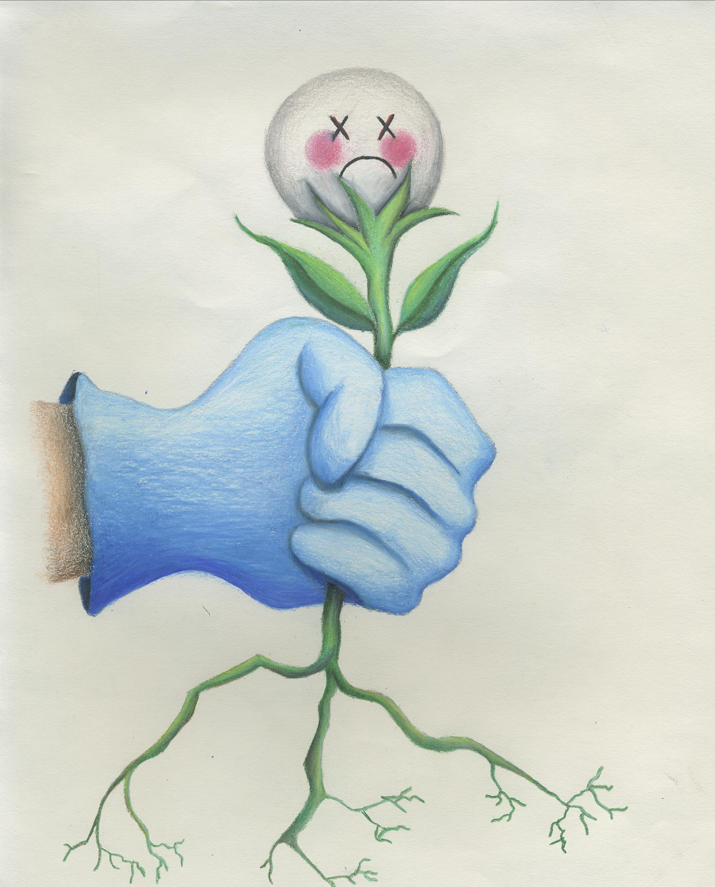 Kurt Borglum Weeds Gone Inc Serving Seminole and North Orange County FL Gardens and Lawns graphic